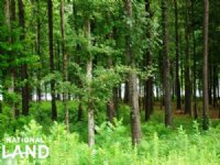 1.08 Acre Recreational Homesite : Akron : Hale County : Alabama