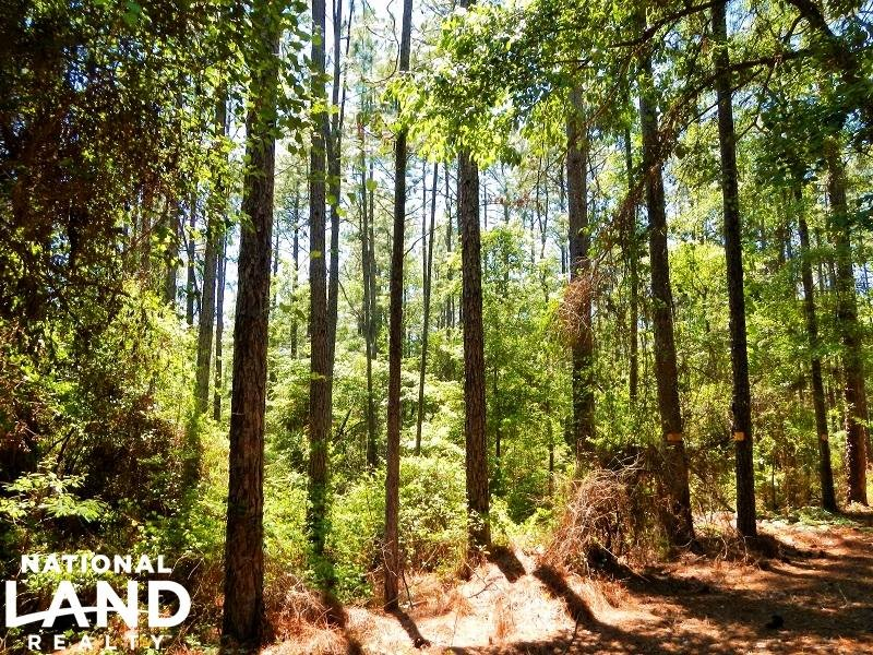 119 Acre Recreational Timberland : Citronelle : Mobile County : Alabama