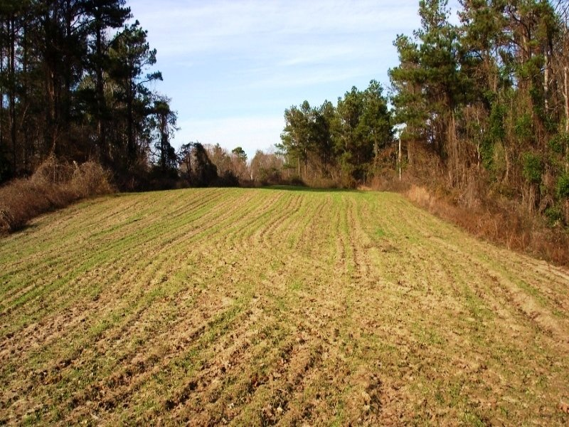 280 Acre Hunting & Timber Land : Livingston : Sumter County : Alabama