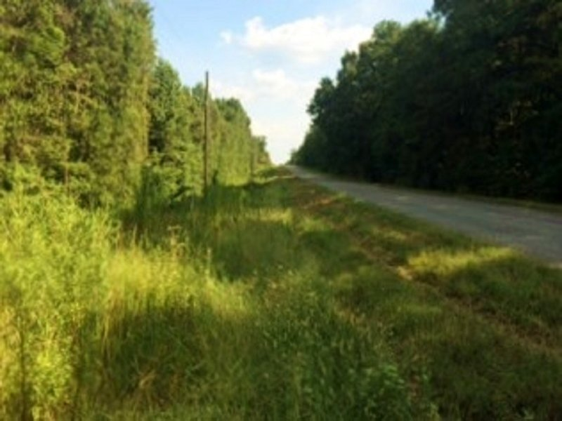Recreational Hunting & Timber : Clayton : Barbour County : Alabama