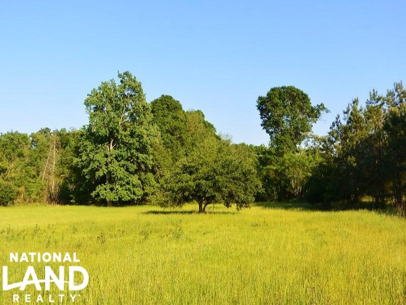 Manning Hunting & Timberland Tract : Manning : Clarendon County : South Carolina