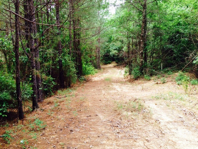 41.3 Acre Recreation & Timber Inves : Chatom : Washington County : Alabama
