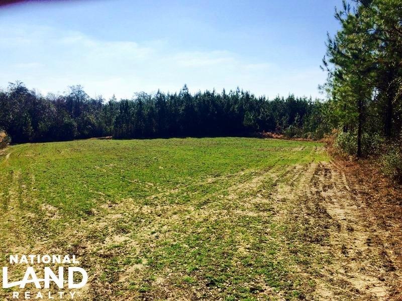 The Vinegar Bend - Deer Park Tract : Vinegar Bend : Washington County : Alabama