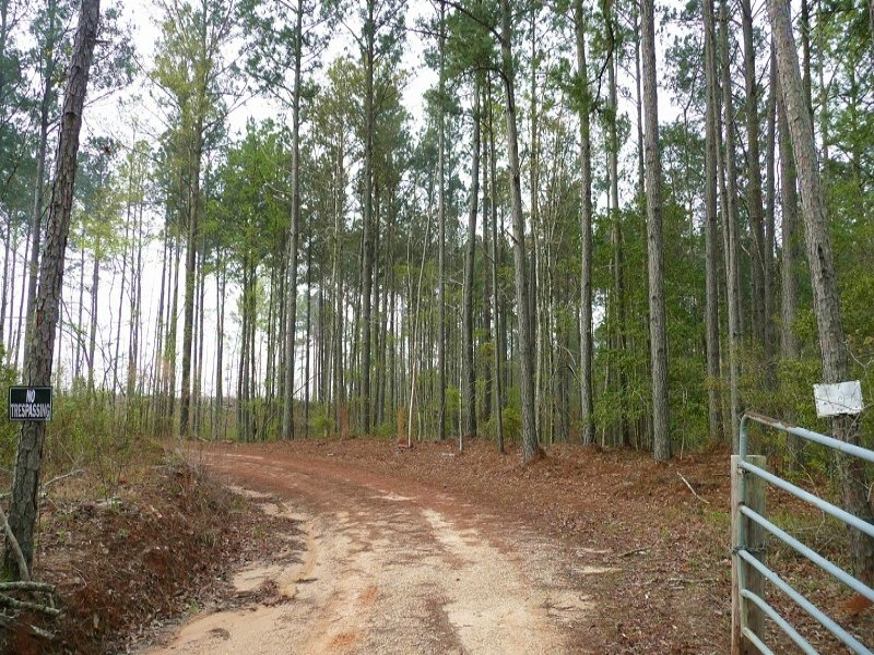 40 Acre Recreational Hunting & Timb : Enterprise : Clarke County : Mississippi