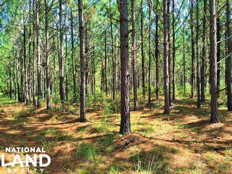Baxley Recreational Timberland : Baxley : Appling County : Georgia