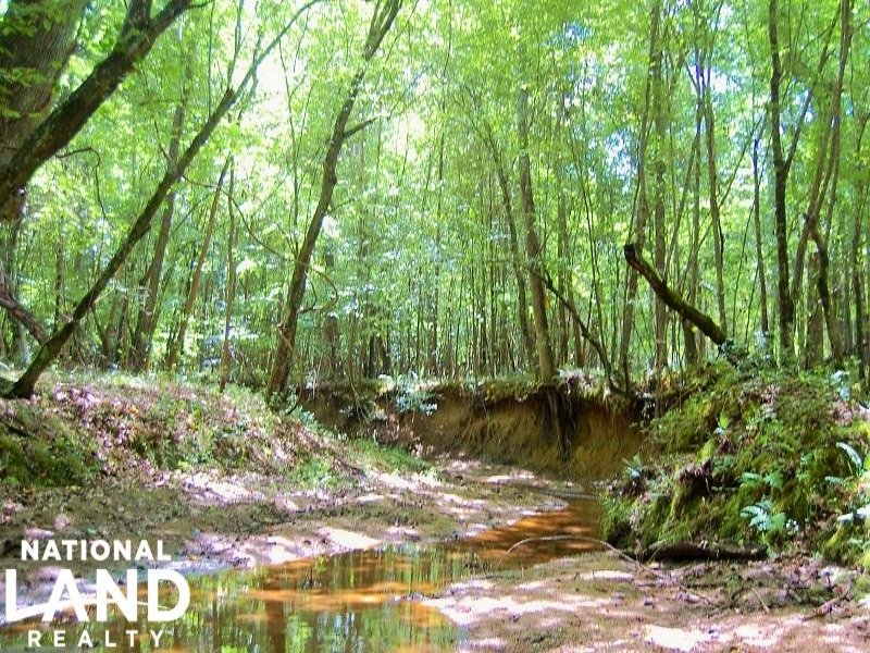 Hunting & Timber Tract With Creek : Richburg : Chester County : South Carolina
