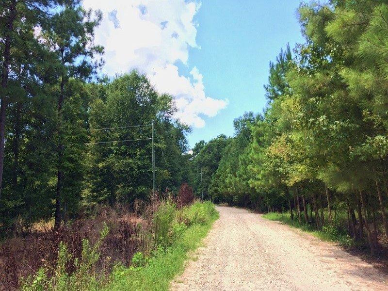 Private Country Homesite : Saint Stephen : Berkeley County : South Carolina