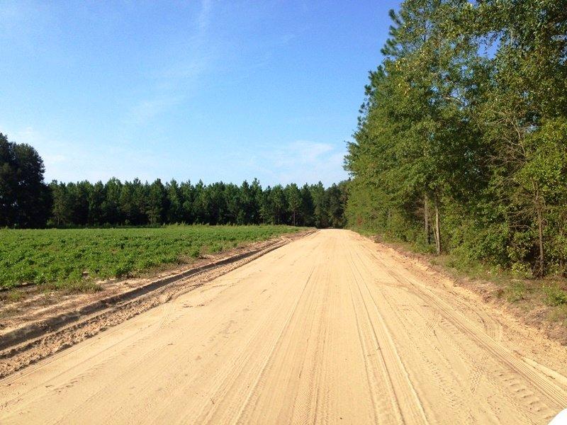 Black Creek Mini Farms Lot 8 : Pembroke : Bryan County : Georgia