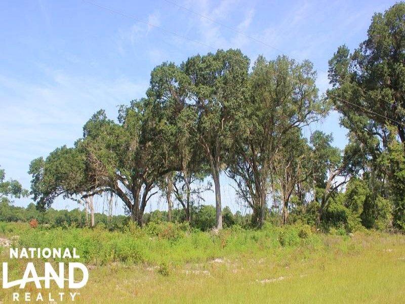 Nahunta Recreational Timber Investm : Nahunta : Brantley County : Georgia