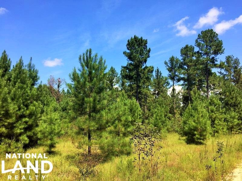 Lyons Private Recreational Homesite : Lyons : Toombs County : Georgia