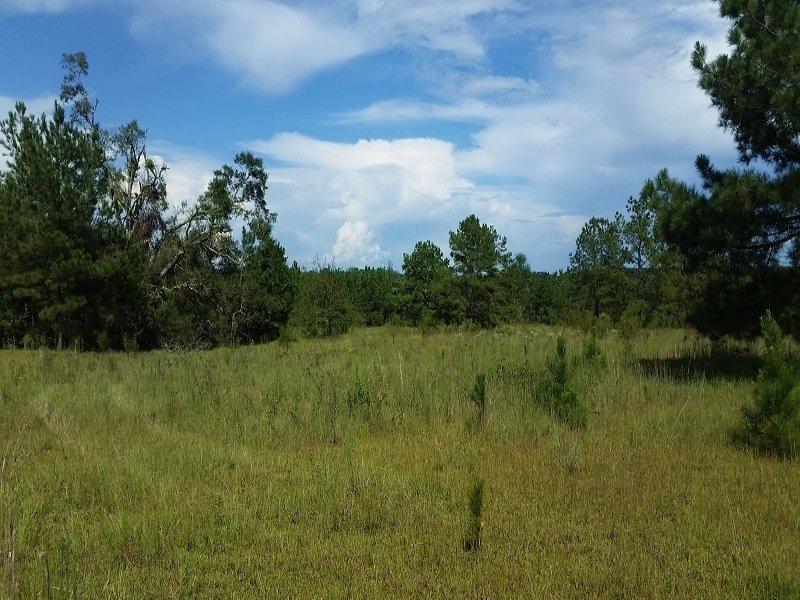 Foster Creek Hunting Tract : Headland : Henry County : Alabama