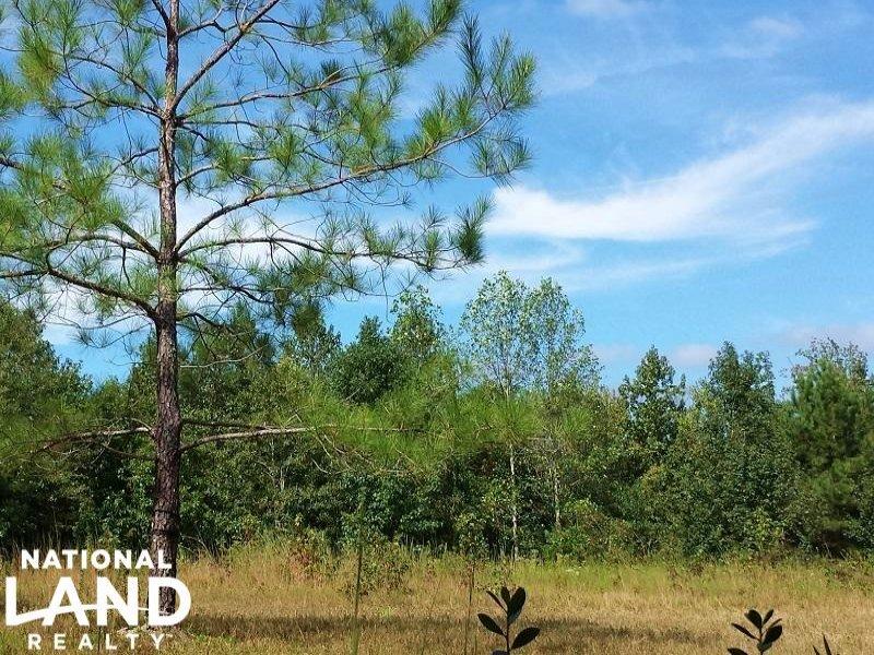 Private Hunting Land : Wallace : Duplin County : North Carolina