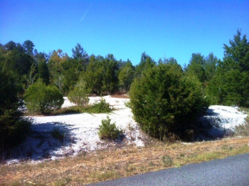 164 Acre Belmont Community Hunting : Belmont : Sumter County : Alabama