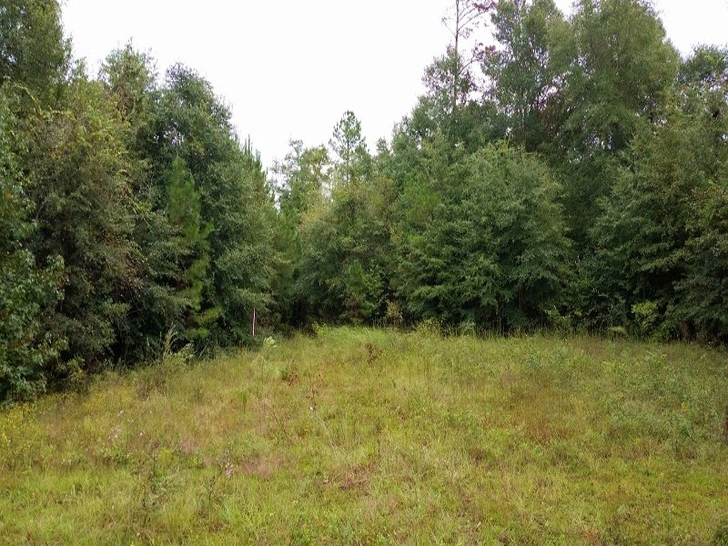 Recreational, Hunting Or Homesite L : Abbeville : Henry County : Alabama
