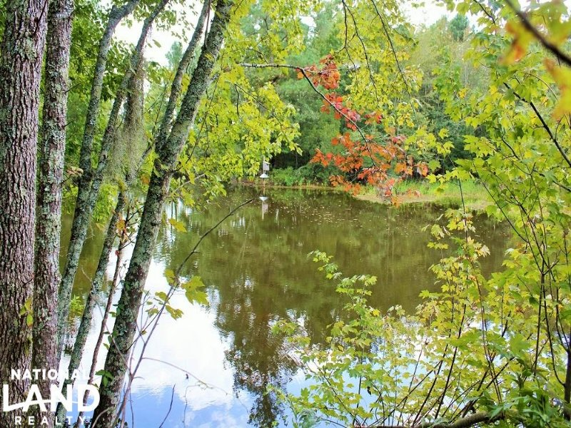 497 Acre Lynches River Hunting Trac : Lake City : Florence County : South Carolina