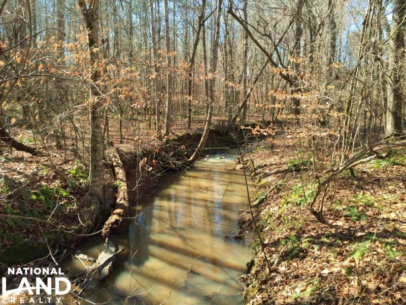 120 Acre Recreational Timber Invest : Salem : Lee County : Alabama