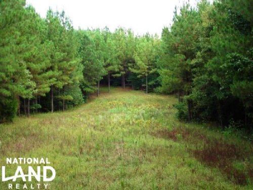 Hunting & Timber Land With Cabin : York : Sumter County : Alabama