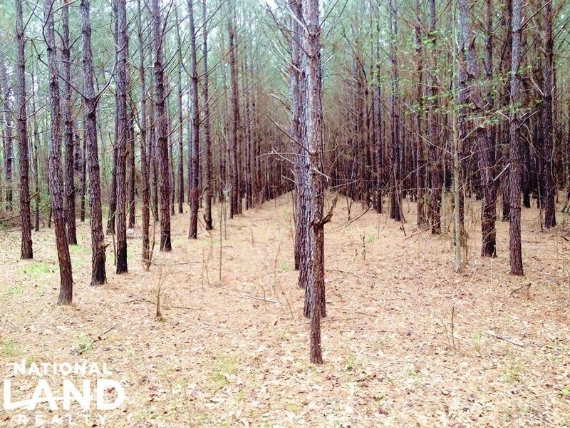 70 Acre Timber & Recreational Inves : Chatom : Washington County : Alabama