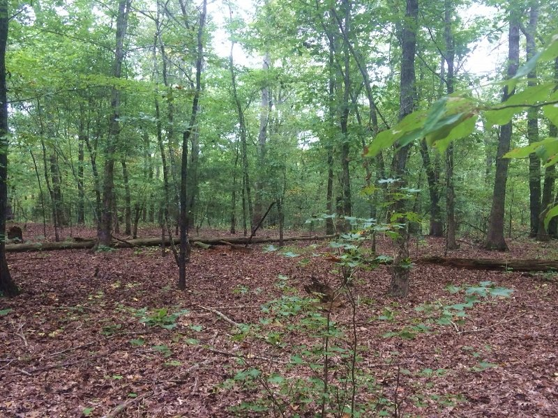 Hunting, Timber, And Homesite Inves : Fayette : Fayette County : Alabama