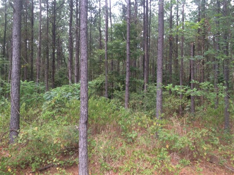 Timberland, Hunting Land For Sale : Sand Hill : Rankin County : Mississippi