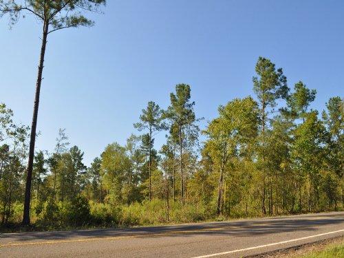 245 Acres Sh 787 : Rye : Liberty County : Texas