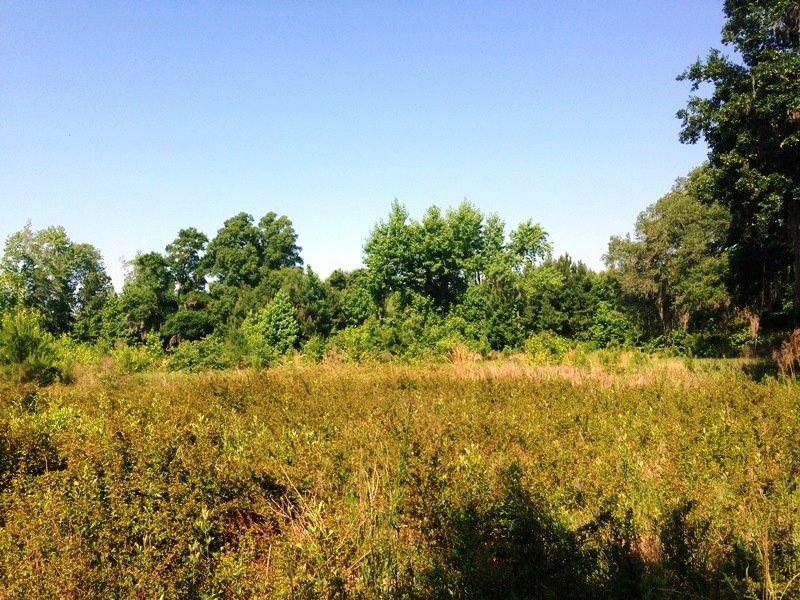 Residential Or Recreational Land : Brunswick : Glynn County : Georgia