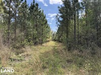 143.83 Acre Recreational Timber Inv : Townsend : McIntosh County : Georgia