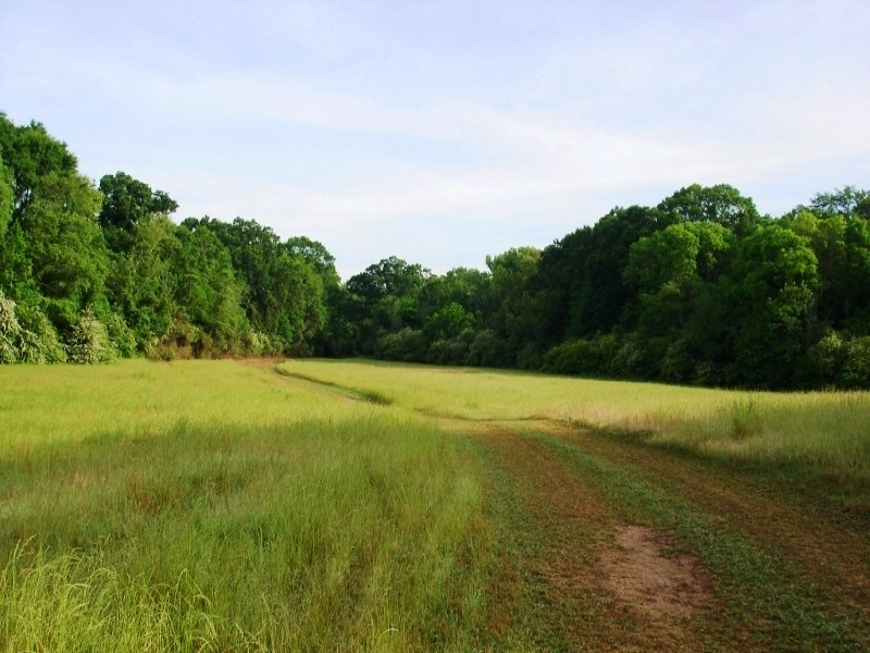 Agricultural And Recreational Land : Moundville : Hale County : Alabama
