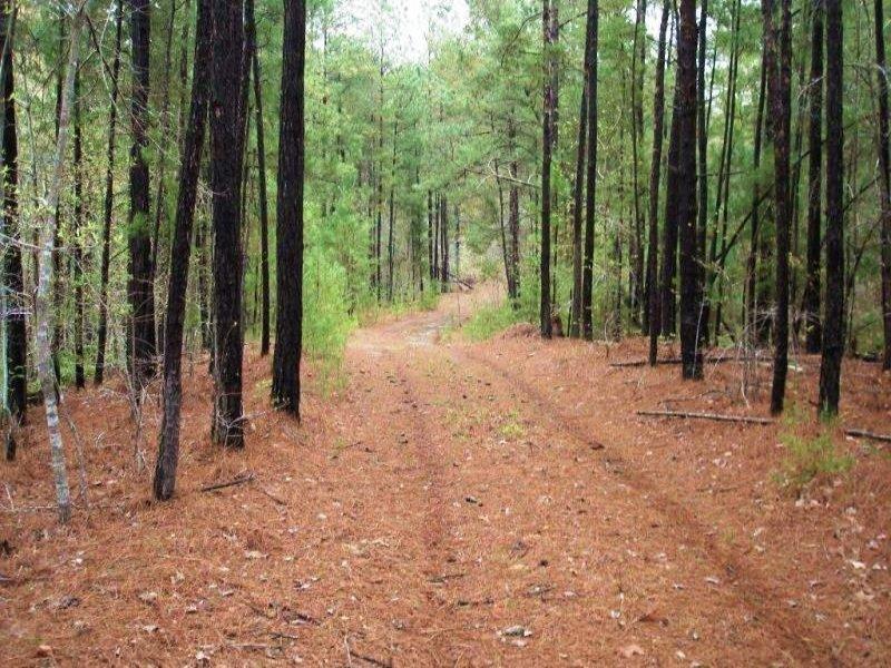 Recreational Hunting Tract : Brookwood : Tuscaloosa County : Alabama