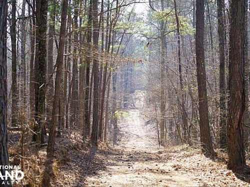 Jones Farm Timber Investment : Alpine : Talladega County : Alabama