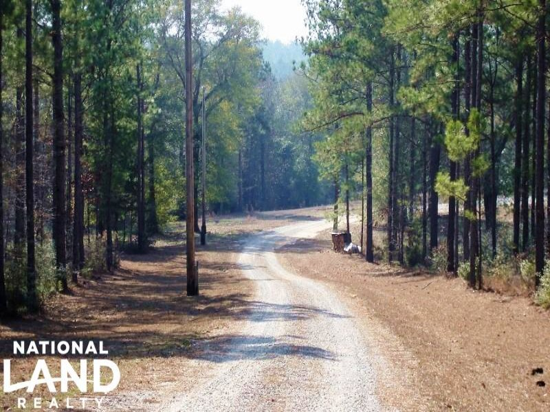 Pine Barren Creek : Millry : Washington County : Alabama