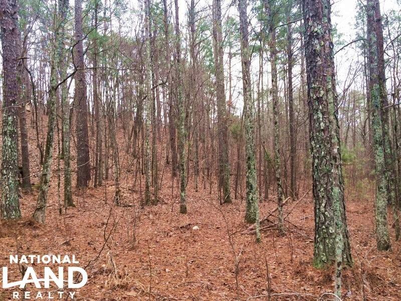 Private Hunting : Glencoe : Calhoun County : Alabama
