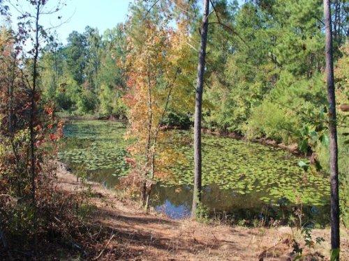 Clements Farm : Hephzibah : Richmond County : Georgia