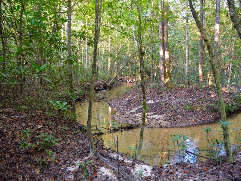 Zeigler Creek : Quincy : Gadsden County : Florida