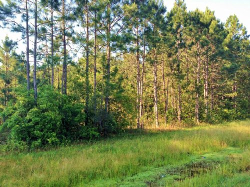 4.49 Acres On Hwy 84 : Ludowici : Long County : Georgia