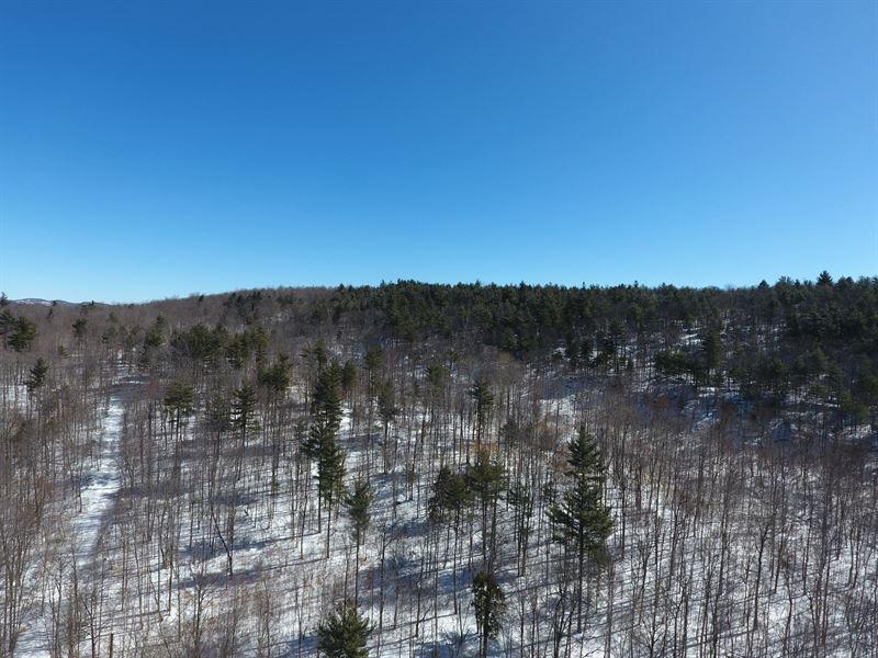 Harris Road Forest : Horicon : Warren County : New York