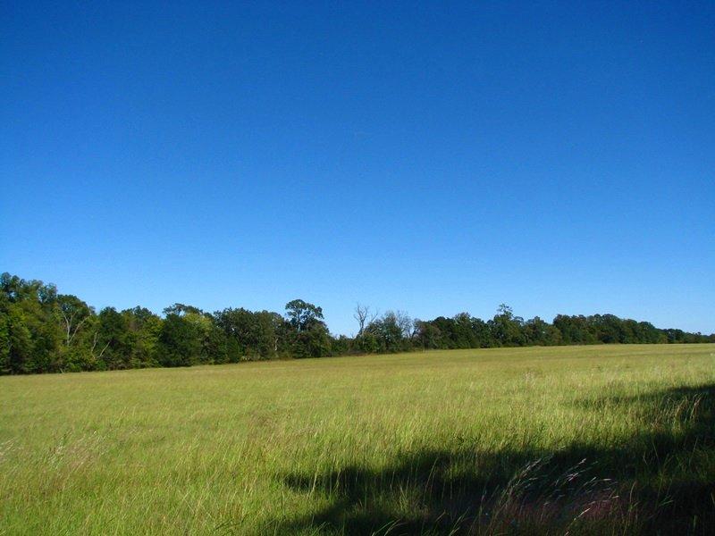Darwin 37 : Darwin : Pushmataha County : Oklahoma