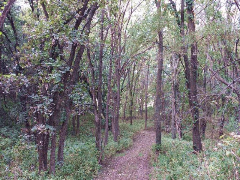 Ashland Acreage With Trees & Wi : Ashland : Saunders County : Nebraska