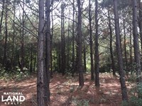 Wooded Homesite : Pike Road : Montgomery County : Alabama