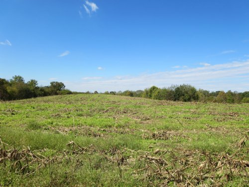 Plenty Of Pastureland : Farmville : Prince Edward County : Virginia