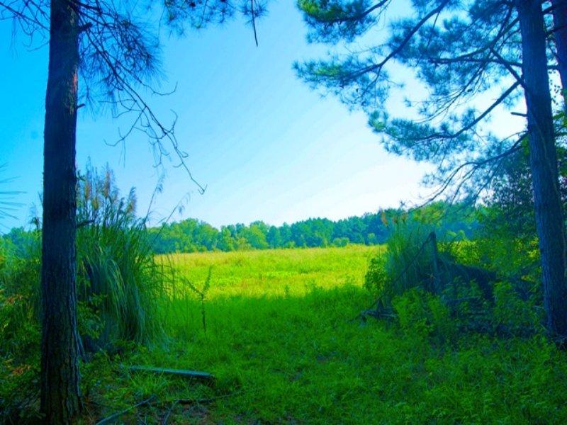 Washington Camp Tract : Sylvania : Screven County : Georgia