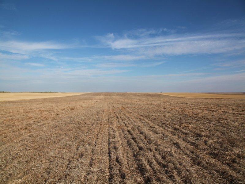 1,039.3+/- Acres Dryland : Fleming : Logan County : Colorado