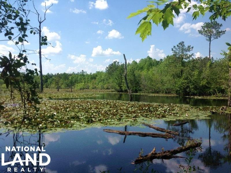 Loris Hunting And Recreational Trac : Loris : Horry County : South Carolina