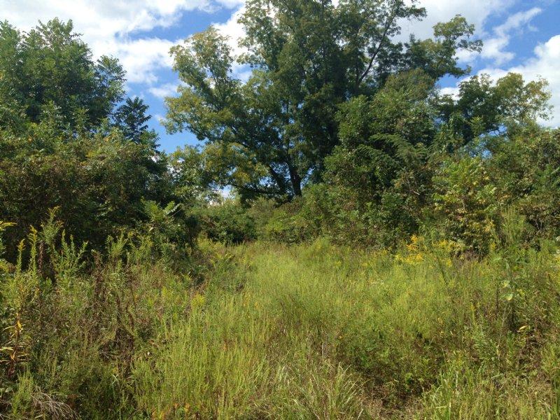 Newbern 40 : Newbern : Hale County : Alabama