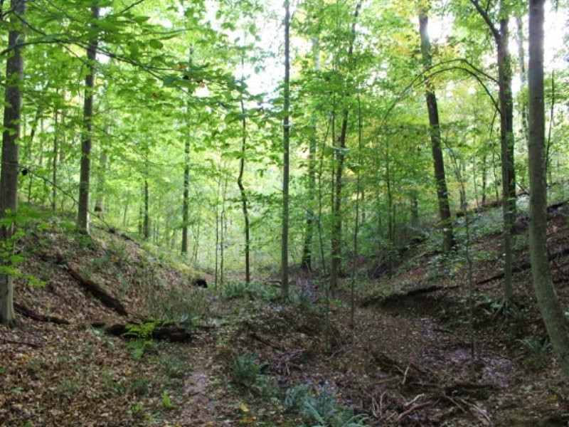 Potter Ridge - 28 Acres : Creola : Hocking County : Ohio