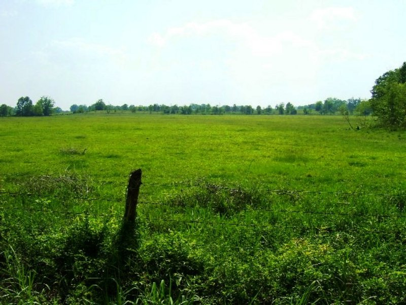 80 Acres For Sale : Prairie : Clay County : Mississippi