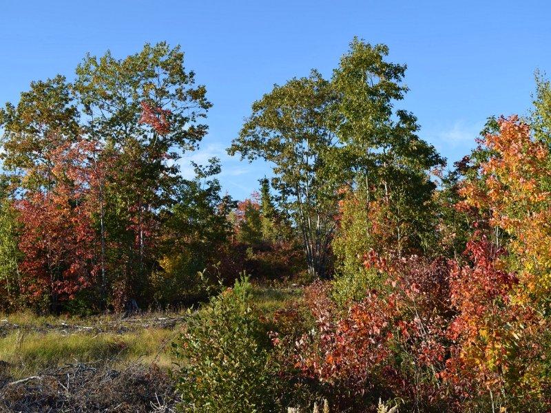 Downeast Maine Acreage : Steuben : Washington County : Maine
