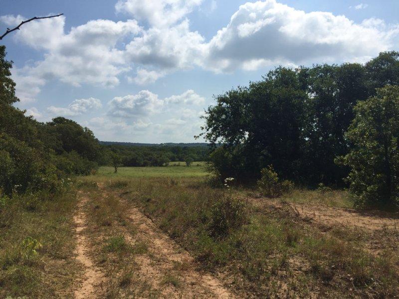 69 Acres With Wildlife : Stephenville : Erath County : Texas