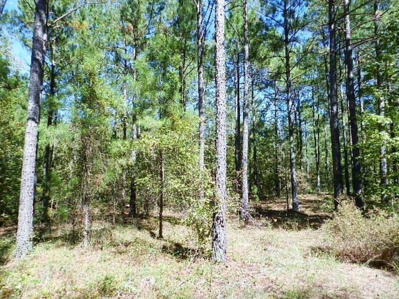 Hunting Paradise/ Timber Investment : East Dublin : Laurens County : Georgia