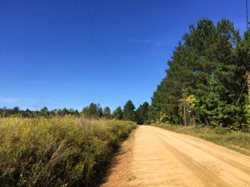 Small Tract Loaded With Big Timber : Harrison : Washington County : Georgia